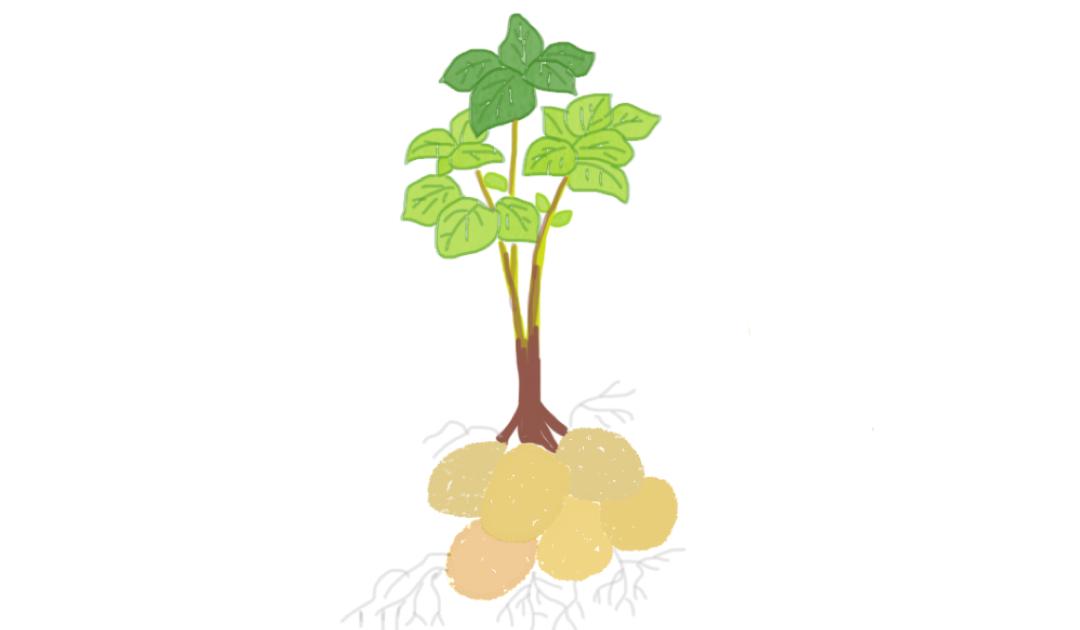 patates october geneva families